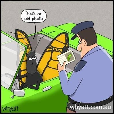"""Cartoon by Tim Whyatt. Bug driving a convertable """"That's an old photo"""" whyatt.com.au"""