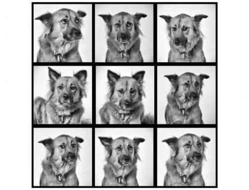 Do you shoot pets? No, but I do photograph them